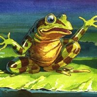 7_31200_323, Two frogs -